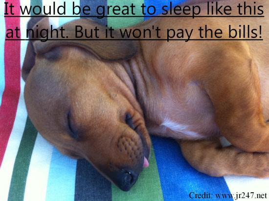 Dog happily sleeping