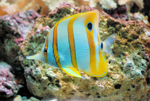 Stock image of bright tropical fish